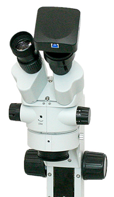 Stereo Microscope with Camera Mounted over Binocular Eyetube