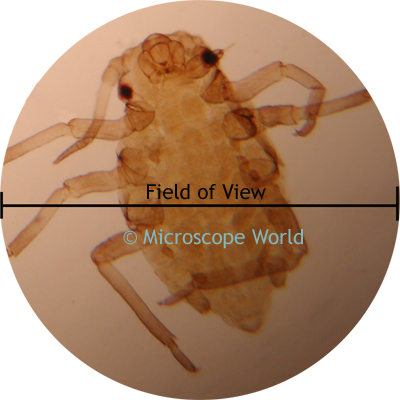 Microscope Field of View Image