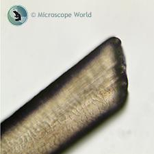 Hair Shaft under the Microscope
