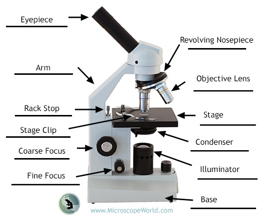 Labeling the parts of the microscopes including free printouts label the parts of the microscope answers ccuart Gallery