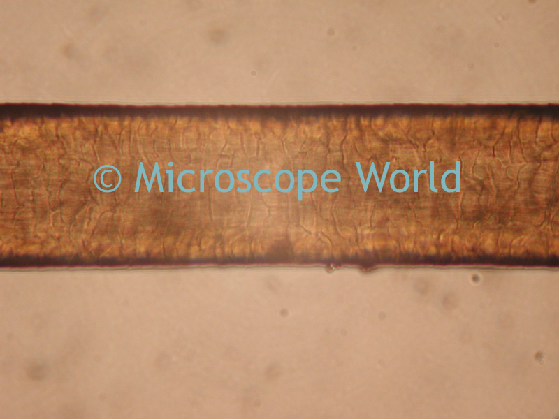 Microscope World Blog July 2009