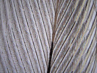 Bird feather at 40x magnification