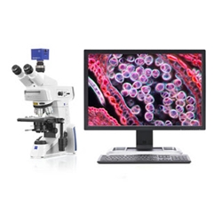 Microscope Ergonomic Work Station