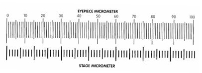 stage micrometer image